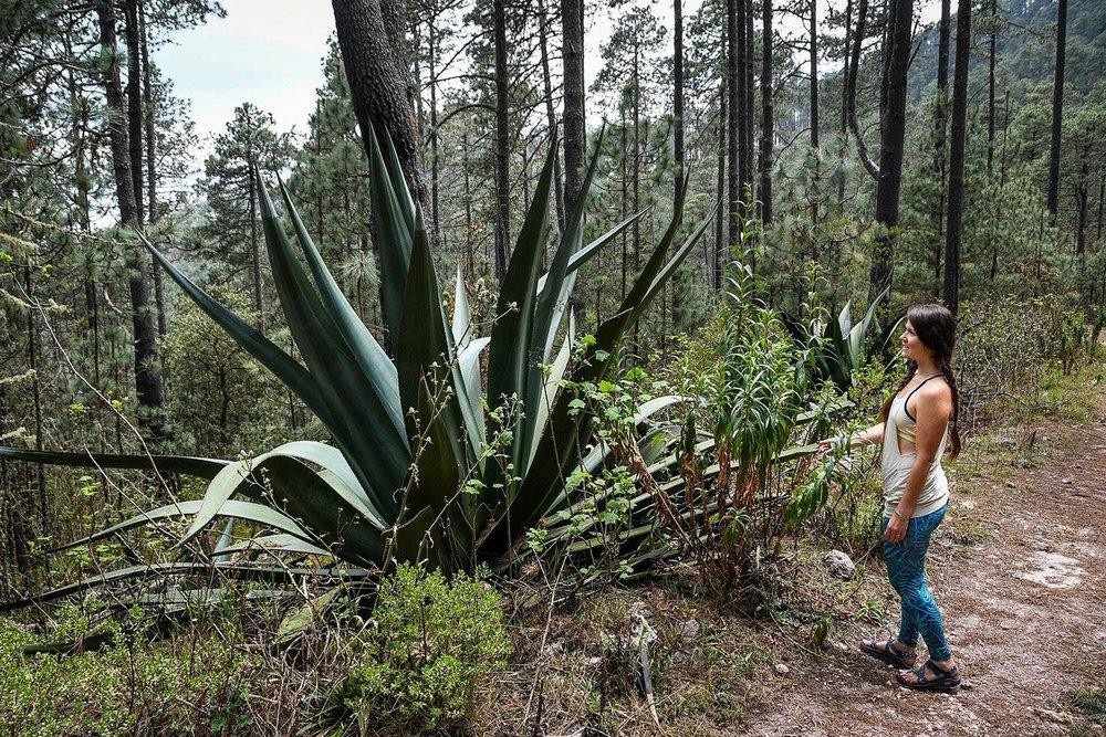 Hiking in Oaxaca Sierra Norte Villages Century Agave
