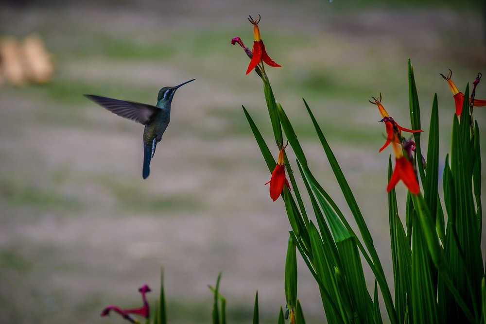 Hiking in Oaxaca Sierra Norte Villages Hummingbird