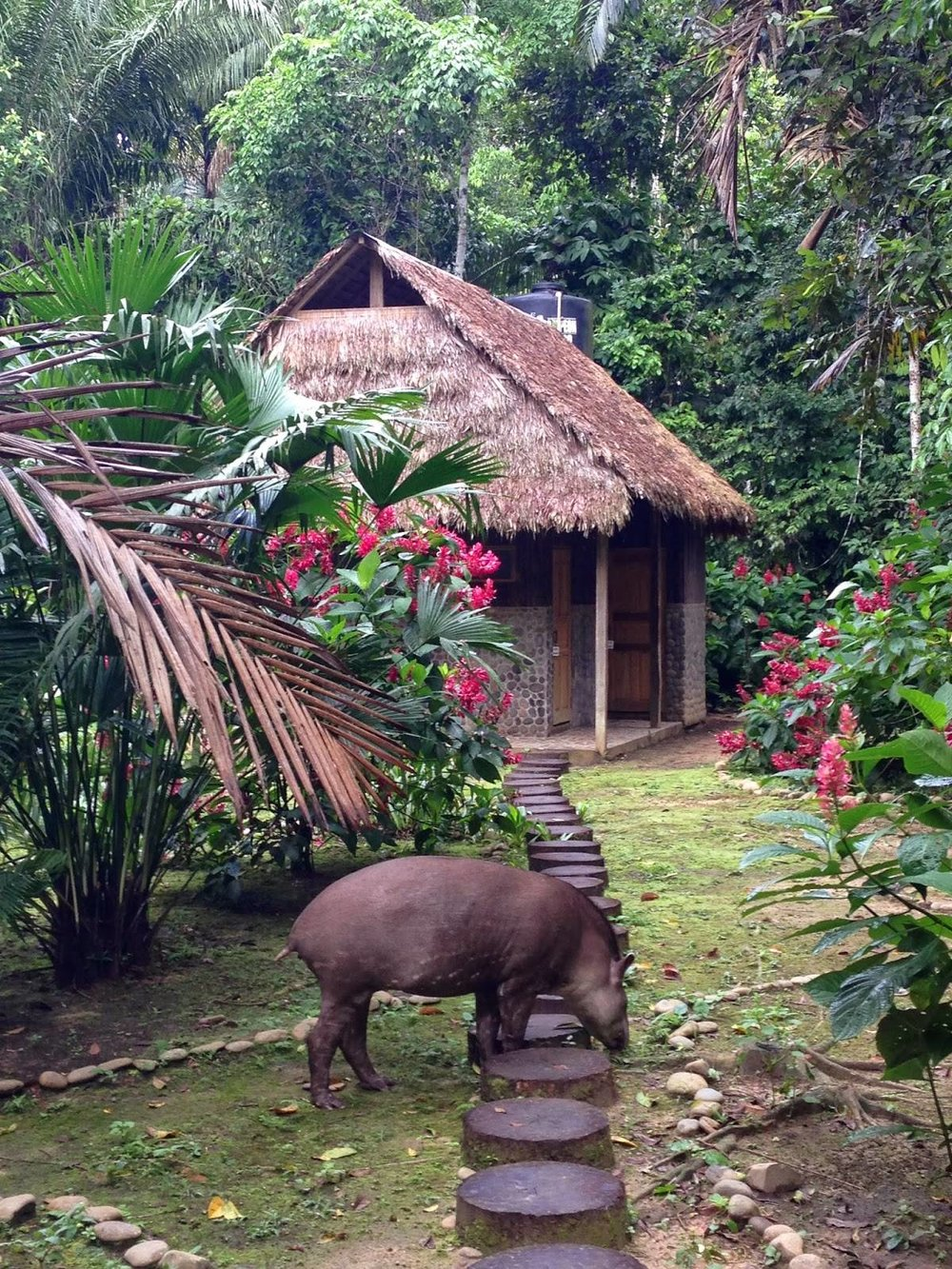 Welcome to the Madidi Jungle Ecolodge, our home away from home in the Amazon Jungle.