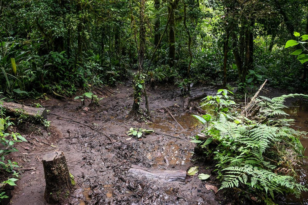 Things+to+do+in+Arenal+Costa+Rica+Rio+Celeste+Muddy+Path.jpg