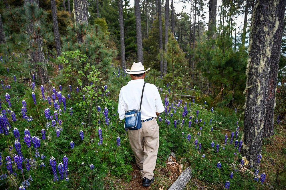 Things to Do in Mexico Sierra Norte Mountains