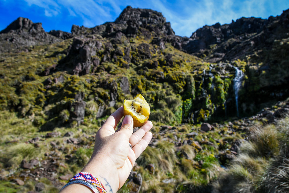 Top Things to Do in New Zealand Eat a Golden Kiwi