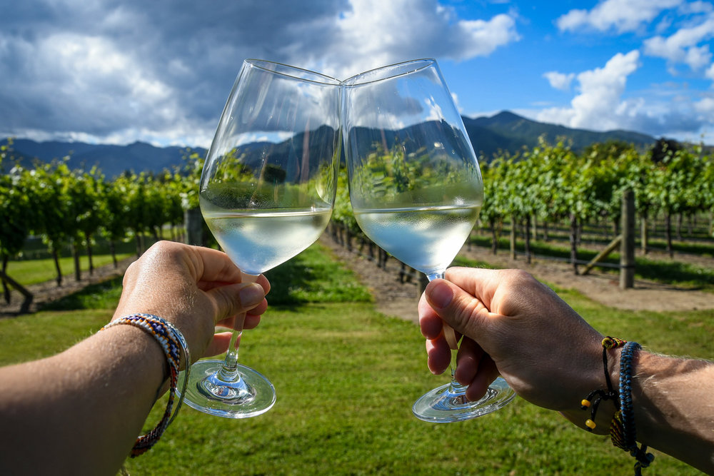 Top Things to Do in New Zealand Wine Tasting Cheers