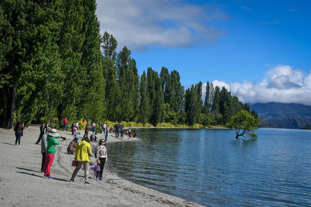 South Island New Zealand Itinerary That Wanaka Tree