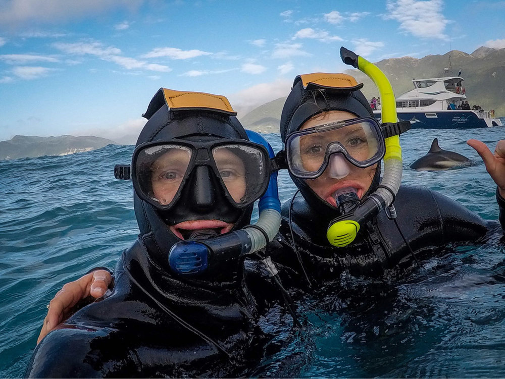 South Island New Zealand Itinerary Road Trip Swimming with Dolphins in Kaikoura