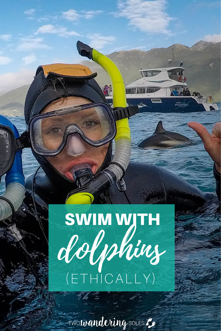 Swim with Dolphins (Ethically) in New Zealand