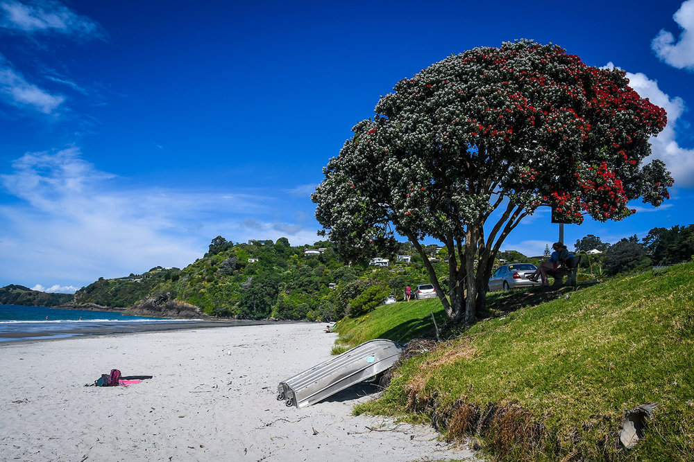 North Island New Zealand Itinerary Waiheke Island Beach