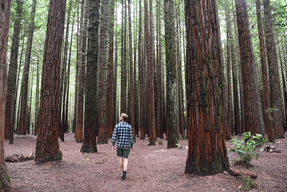 North Island New Zealand Itinerary The Redwoods