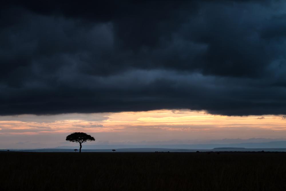 masaii-mara-acacia-storm-corrected.jpg