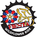 Fiesta Wildflower