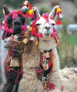 Cusco14.jpg