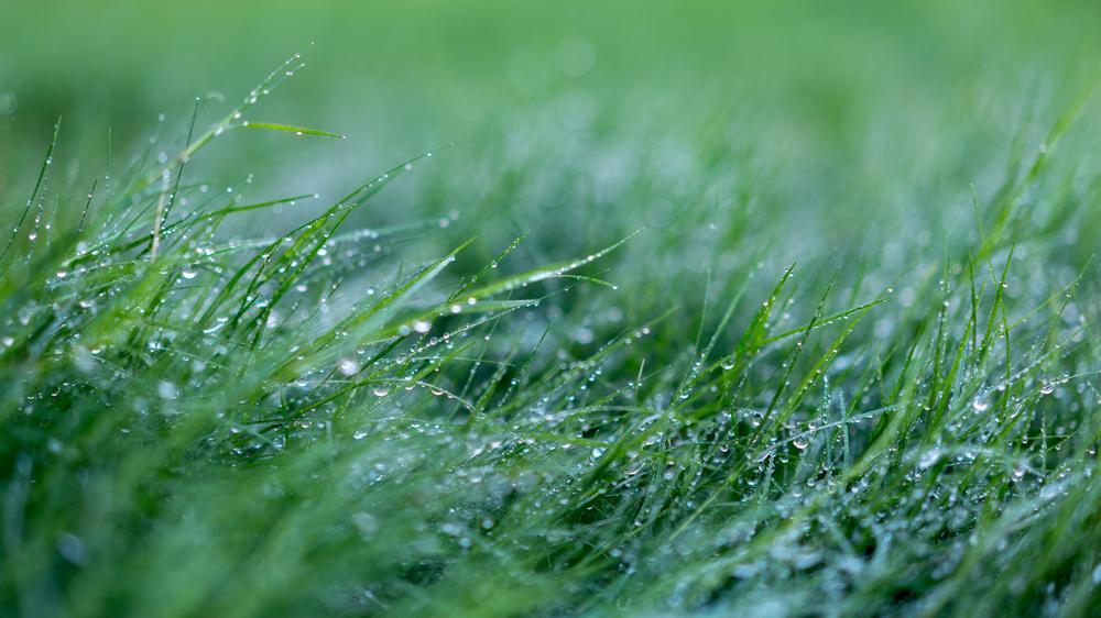 dewy grass-6.jpg