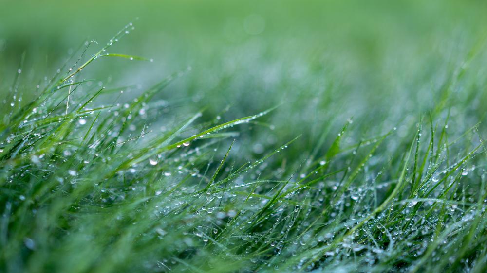 dewy grass-5.jpg