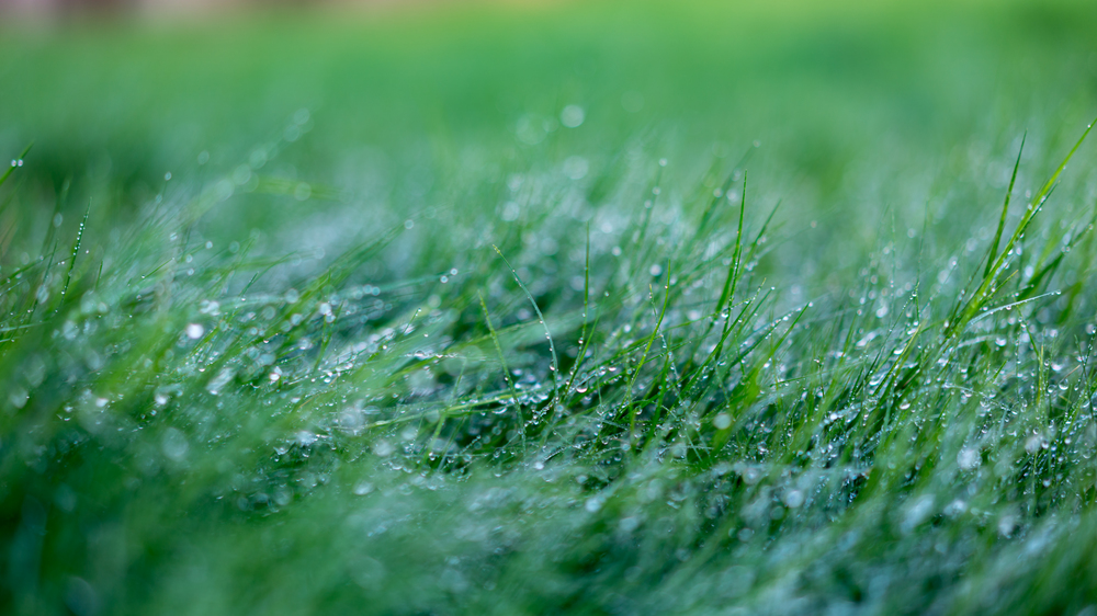 dewy grass-7.jpg