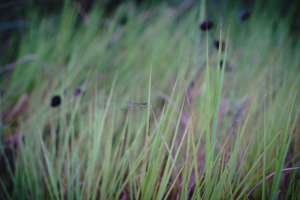 FP pond final-7.jpg