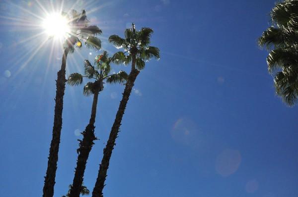 amy tangerine palm springs