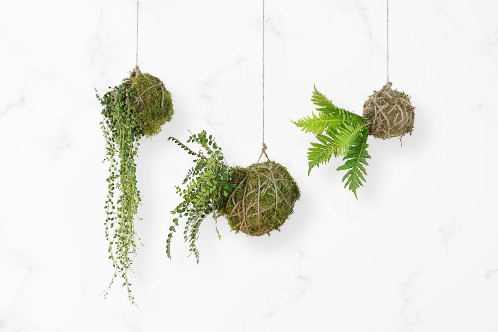 kokedama string garden love japan magazine