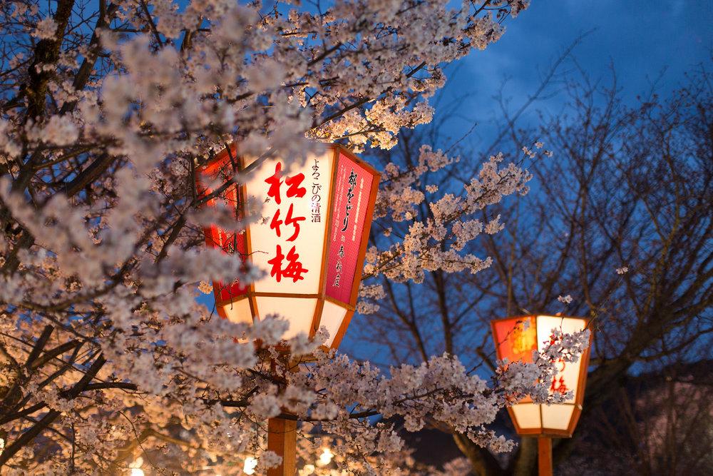 Sakura at night. Image by:  Mario Lu