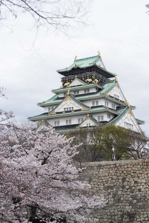 Sakura at Himeji Castle. Image by:  Gamemall104