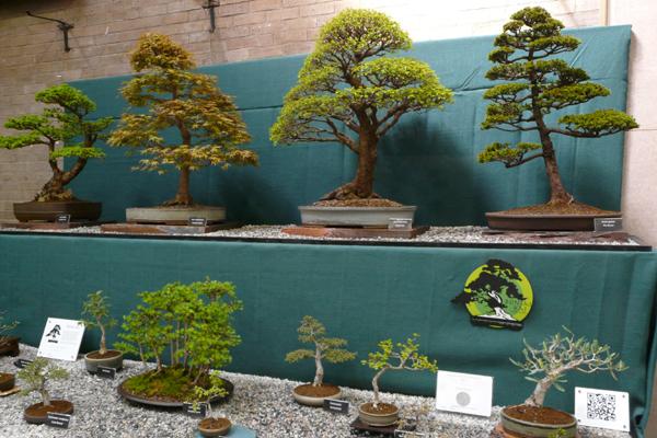 9 bonsai exhibition.JPG