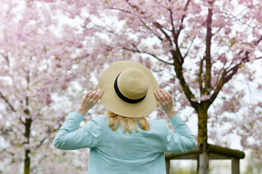 cherry blossoms tokyo japan