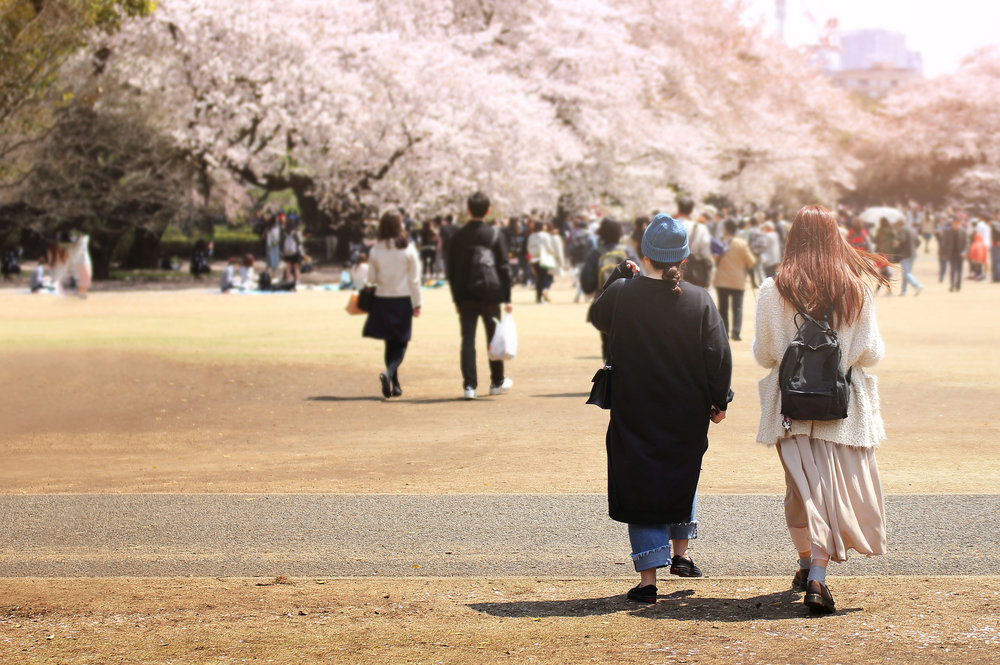 shijuku gyoen park gardens japanese tokyo japan sakura cherry blossom