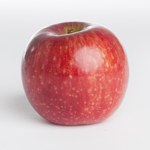 Apple - Jonathan