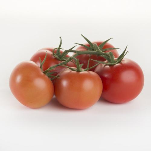 Tomato-Truss