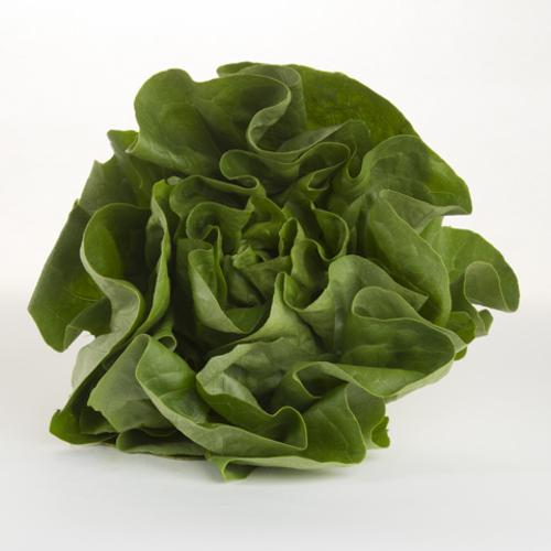 Lettuce (Butter)