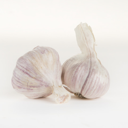 Garlic (Head)