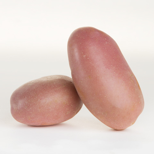 Potato (Desiree)