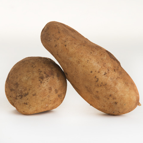 Potato (Kipfler)