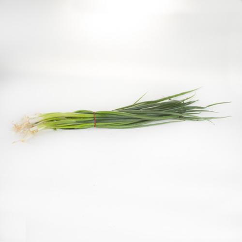 Onion (Spring)