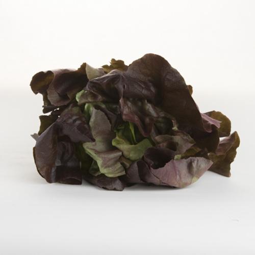 Lettuce (Mignonette)