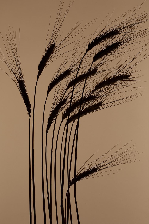 GRASS SILO.jpg
