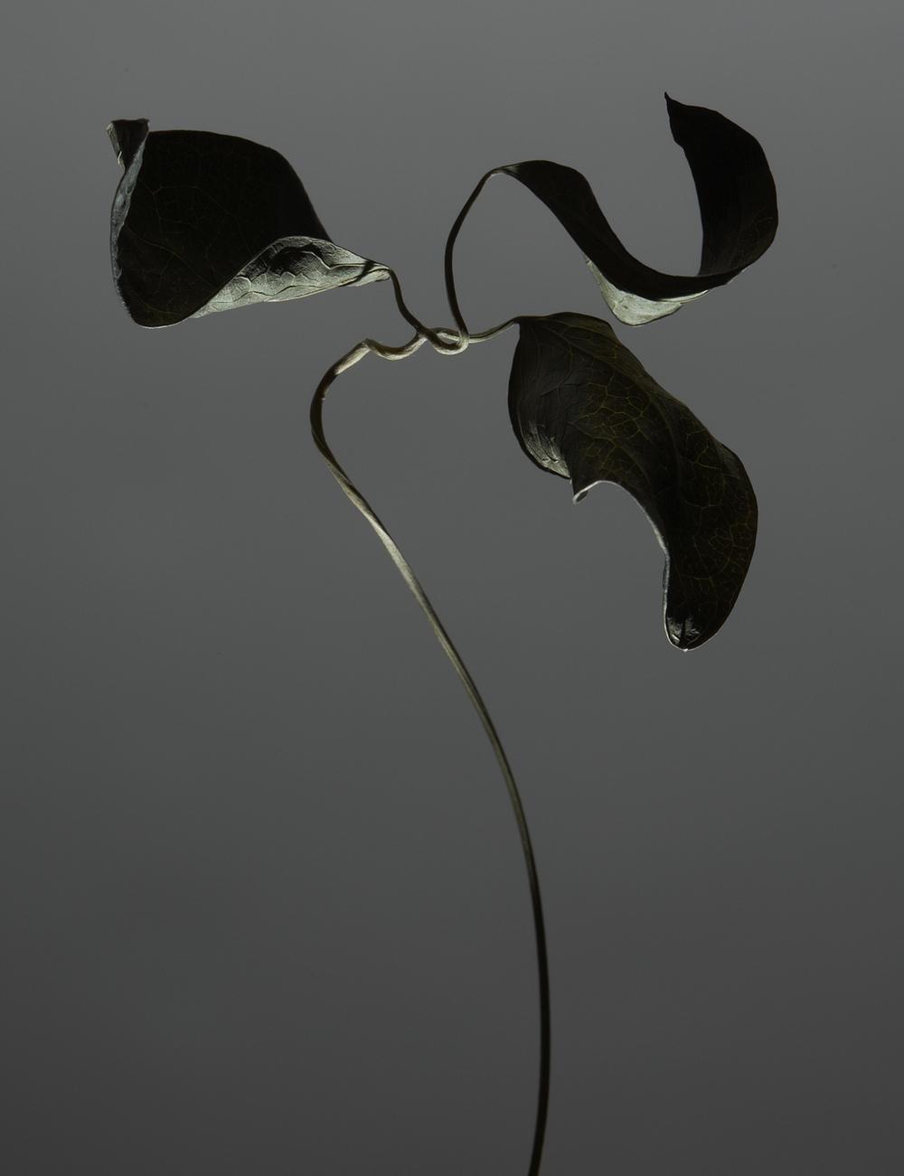 01-14-11_FLOWERS 0926.jpg