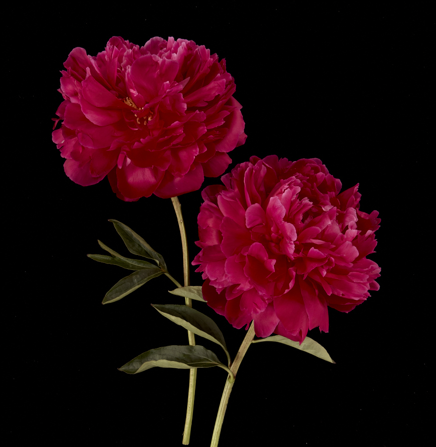 LUCKY FLOWERS 6-20-13 10268.jpg