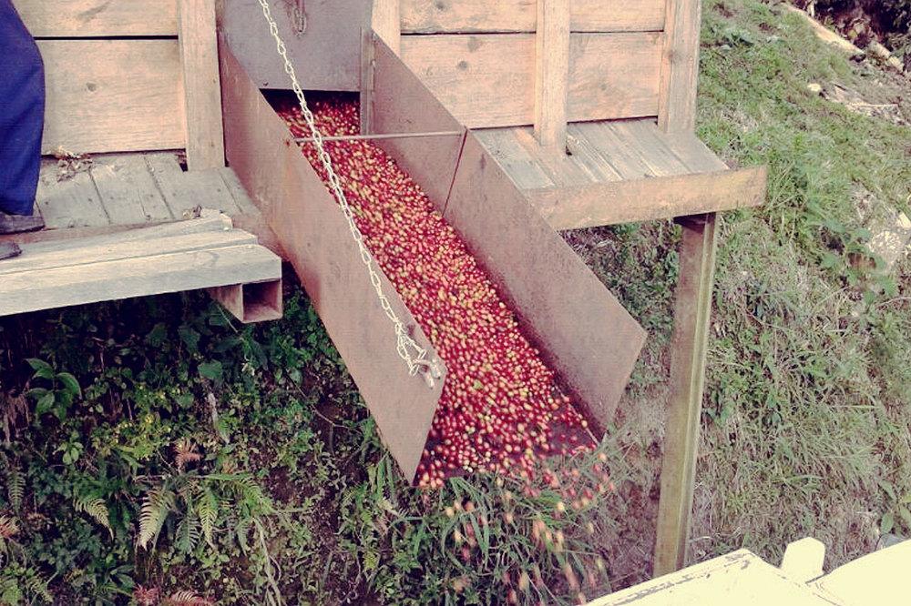 berries_4.jpg