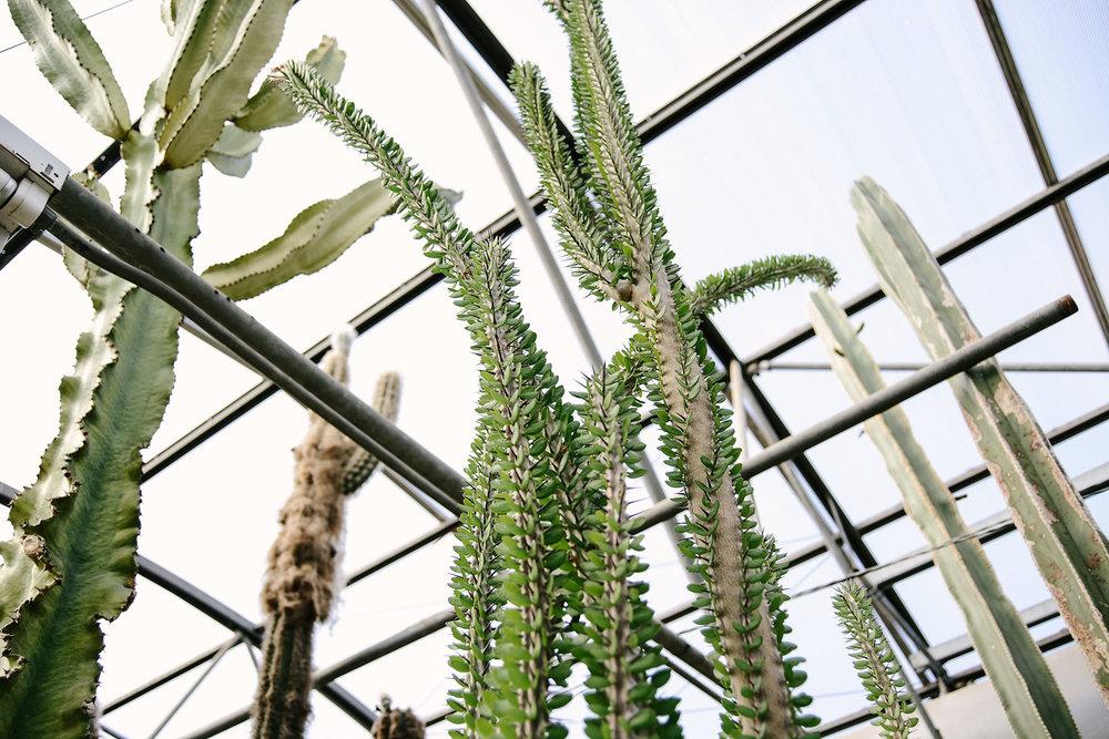 cactus-2-sm.jpg