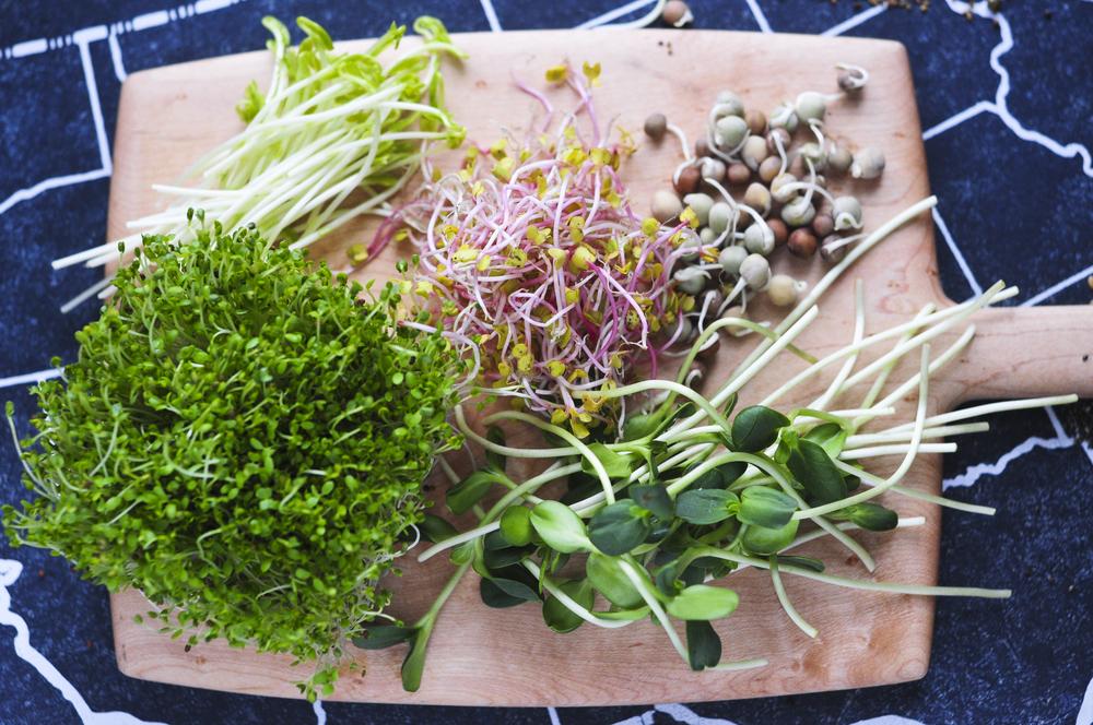 a.big.sprout.seeds.broccoli.sunflower.DSC_4010.jpg