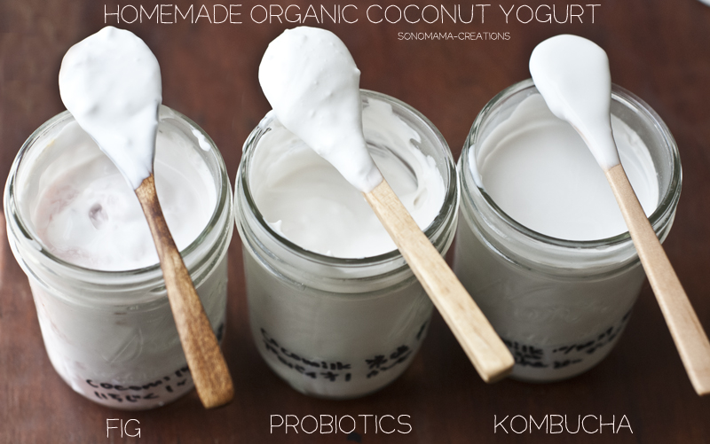 Fig, Probiotics, Kombucha Coconut Milk Yogurt