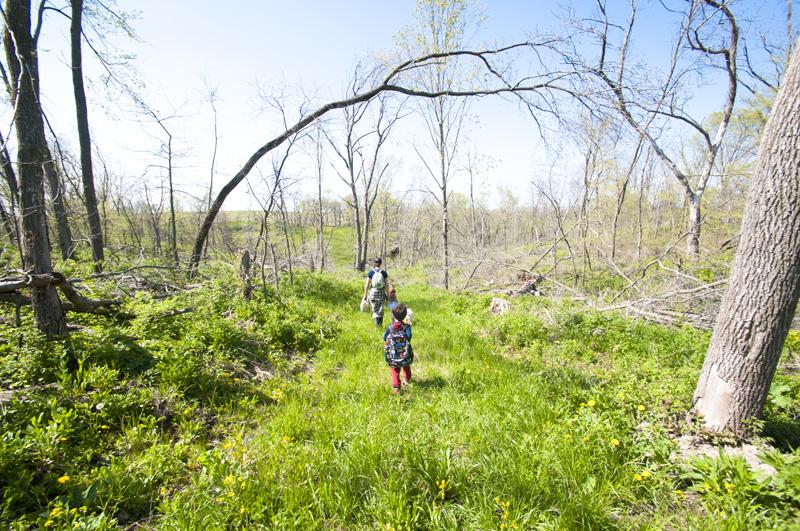 友人宅の裏山(私有地)だけに、歩くのが早い早い。いつのまにやら、いろいろな野草、ハーブを摘んでいる!