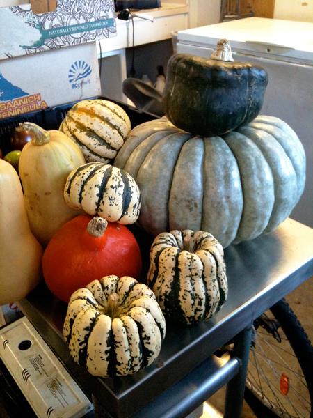 UBC Organic Squash Harvest