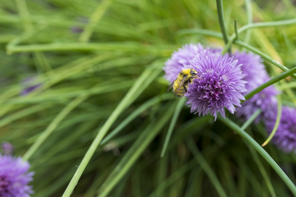 Bee-photo-101