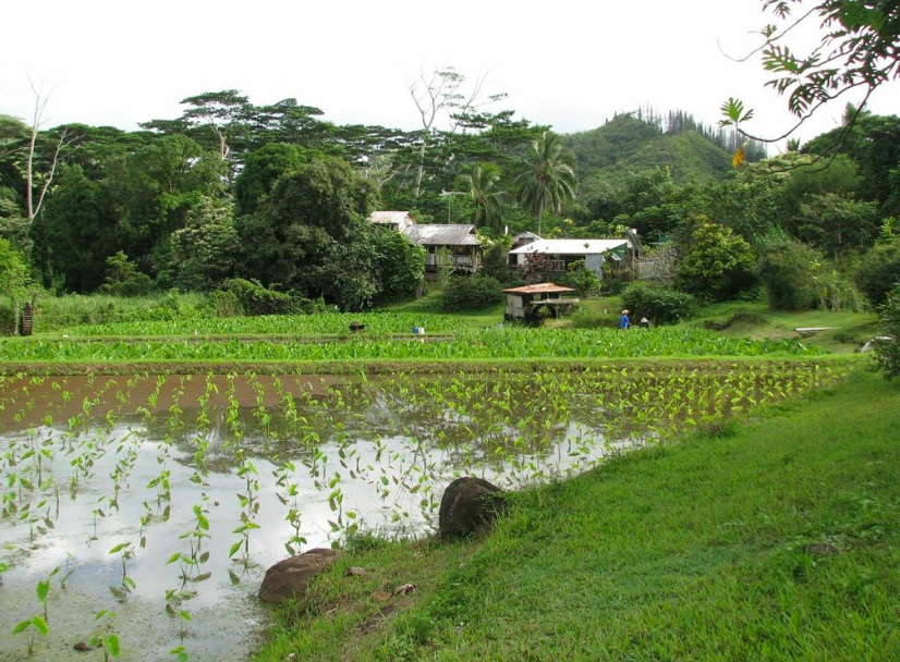 Waianu Farm