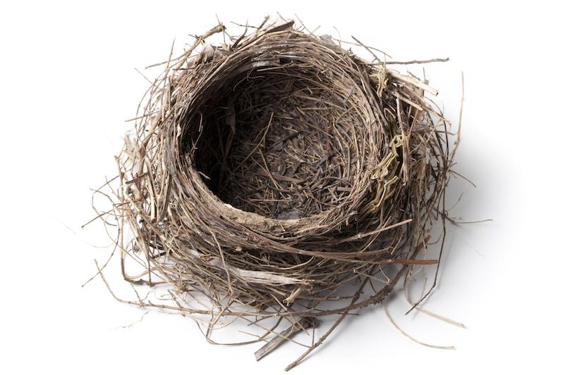 empty - nest.jpg