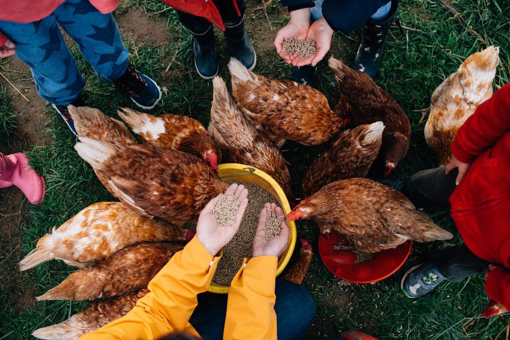 Farm school-103.jpg