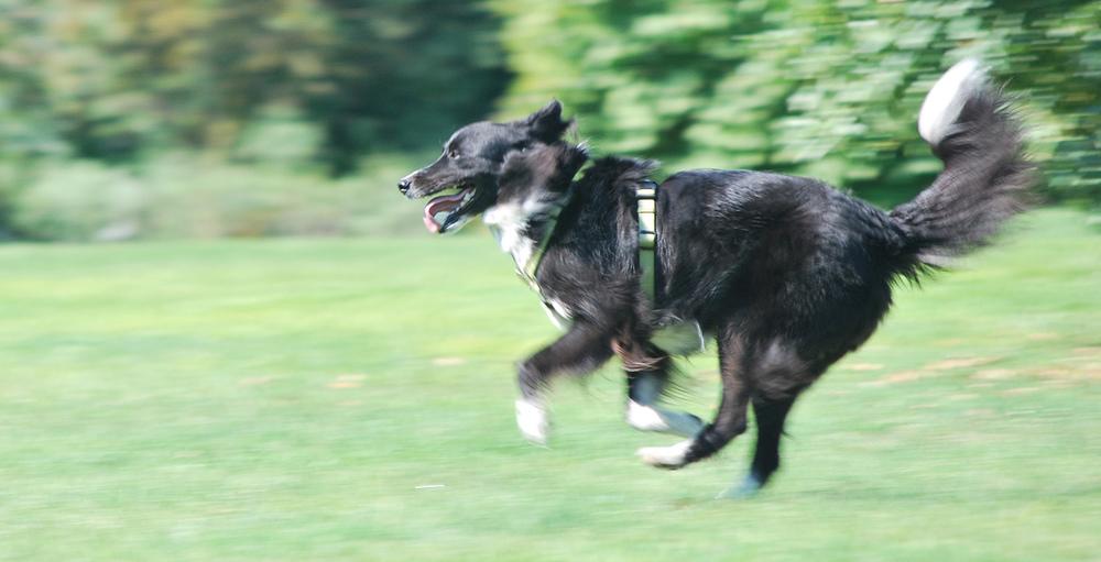 I nostri cani-Modì