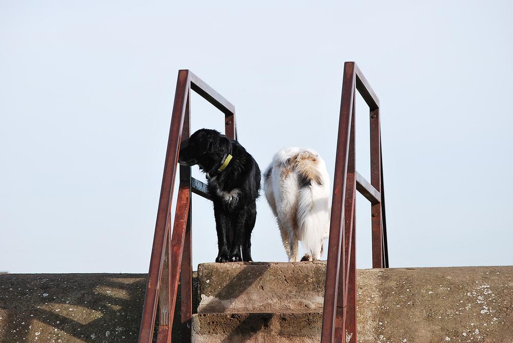 I nostri cani-Nano