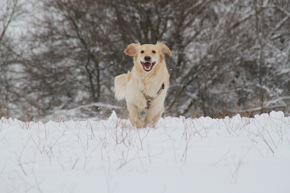 I nostri cani-Zoe